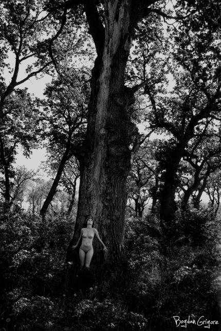 Bogdan Grigore - Artistic Nudes - Sacred tree1